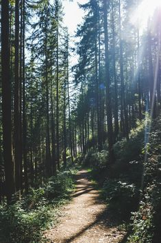 Forest Camp, Pretty Landscapes, Wild Campen, Camping Aesthetic, Looking For Alaska, Ocean Shores, Ardennes, Dream Wall, Adventure Is Out There