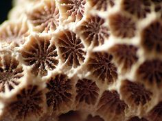 Fossilized Coral? | Flickr - Photo Sharing! Fossilized Coral, Breakfast, Food, Morning Coffee, Essen, Meals, Yemek, Eten