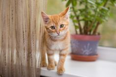 There are lots of reason to celebrate the arrival of spring and summer, but the return of fleas is not one of them. Here are 10 ways to keep them away from your cat.