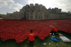 Volunteers came from all over the world. Over 888,000 ceramic poppies planted outside the Tower of London to commemorate the people who died. One for every soldier.