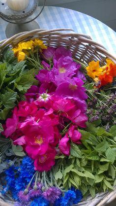 Kakkuihin, salaatteihin... Cabbage, Vegetables, Plants, Food, Essen, Cabbages, Vegetable Recipes, Meals, Plant