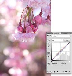 cherry-blossom-2-michelle-johnson-love-that-shot