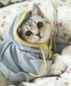 Pets in sweaters are so adorable, but especially when it's a baby kitty. This makes me want to buy sweaters for my cats! Cute Baby Cats, Cute Cats And Kittens, Cute Baby Animals, I Love Cats, Crazy Cats, Kittens Cutest, Funny Animals, Baby Kitty, Funny Animal Pictures