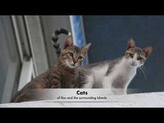 Cats of Kos and the Surrounding Islands. A compilation of amazing pictures. Amazing Pictures, Kos, Islands, Greece, Videos, Music, Youtube, Animals, Greece Country