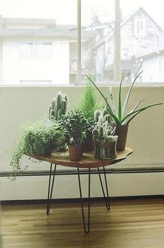 An indoor garden. Plus I love this table