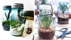 Turn old jars into a terrarium or an herb garden! Terrariums pictured sold by Doodle Birdie. For a tutorial on how to create your own herb garden, check out Better Homes and Gardens. Mason Jar Terrarium, Mason Jars, Bottles And Jars, Glass Jars, Diy Terrarium, Canning Jars, Mason Jar Projects, Mason Jar Crafts, Diy Projects