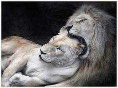 Love is the dream you enter, Though I shake and shake and shake you. Love is the best endeavor, Waiting in the lion's mane.