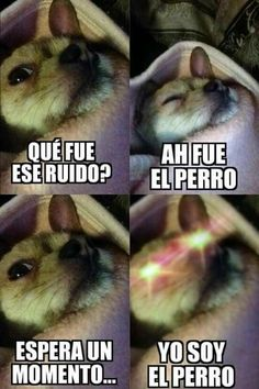 Siganme como Emily no te arrepentirás! Funny Animal Jokes, Funny Cat Videos, Animal Memes, Funny Animals, Lol Memes, Stupid Funny Memes, Funny Spanish Memes, Spanish Humor, Funny Images