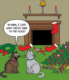 Cats love Christmas !!