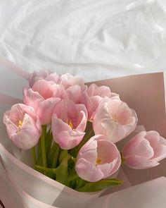 Flower Aesthetic, Pink Aesthetic, Walpapper Vintage, Pink Flowers, Beautiful Flowers, Pink Tulips, Plakat Design, My Flower, Planting Flowers