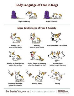 Body language of fear in dogs: Illustration by Lili