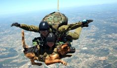 Austrian special forces dropping into Afghanistan...including dogs trained to breathe with oxygen masks.  they are trained to attack anyone carrying a weapon.