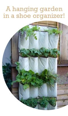 I love this... a hanging garden out of an old shoe organizer!