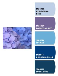 this is MY HYDRANGEA photo, taken right here in my yard! Paint colors from Chip It! by Sherwin-Williams