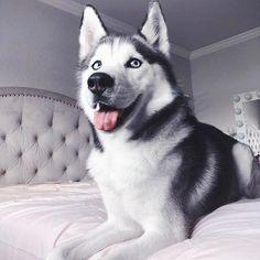 Image may contain: dog