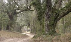 Historic Blakeley State Park - Alabama Birding Trails