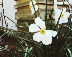 Spring '16