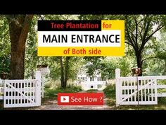 How Plants Help You in Your Prosperity? Vastu Tips for Tree Plantation