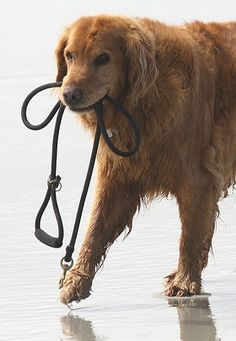 How to Train a Dog to Walk Without Pulling on the Leash