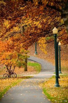 Vélo sous les feuilles d'automne...