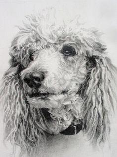 Standard Poodle drawing, original, Puddles