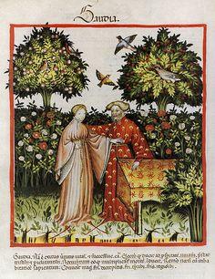 """""""Gaudia"""", Tacuinum sanitatis in medicina, Codex Vindobonensis, c. 1390"""