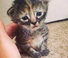 Hoy te traemos la historia de un gato nacido hace relativamente poco tiempo y que tiene un cara muy triste, pero es una ternura. Este g...