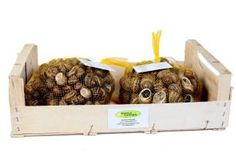 Hodowla i przetwórstwo ślimaków, w tym kawioru! - Certyfikowany Starter - Reproduktory