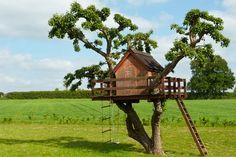 baumhaus zwischen zwei bäumen - Google-Suche