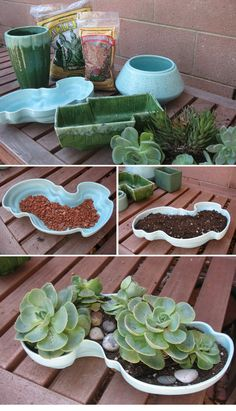 DIY - How to pot succulents