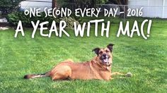 I took a 1-second video of our dog every day in 2016! https://www.youtube.com/watch?v=3oc3PxQPsBk