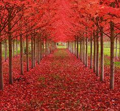 16 árvores mais lindas do mundo (Foto: reprodução) Maple túnel, Oregon, Estados Unidos