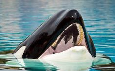 The Miami Seaquarium is About to Get Sued Over Lolita, The Lonely Orca