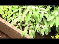 How To: Stage Herbs for Better Gardens from Garden Fresh with Doug Jimerson. Click: http://www.craftsy.com/ext/Pinterest_49_5