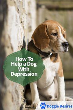 How to help a dog with depression >> http://doggiedesires.com/how-to-help-a-dog-with-depression/