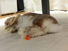 All that carrot eating - exhausting!