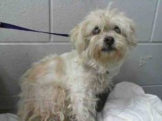 #A470473 Release date: 8/12 I am a female. Shelter staff think I am about 8 years old. I have been at the shelter since Aug 05, 2014. If I am not claimed, after my stray holding period, I may be available for adoption on Aug 12, 2014. http://www.petharbor.com/pet.asp?uaid=SBCT.A470473 call: San Bernardino City Animal Control at (909) 384-1304 https://www.facebook.com/photo.php?fbid=10203230846869557&set=a.10203202186593068&type=3&theater