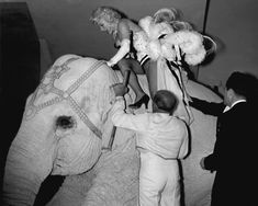 Marilyn Monroe riding a pink elephant at a benefit event at Madison Square Garden, 1955.