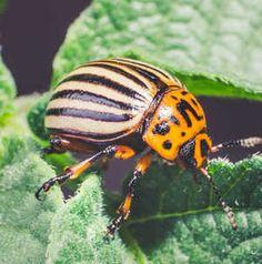 Így védd meg a növényeidet a nyári kártevők ellen