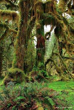 Hike 2, 10 or 35 miles through mossy, green forest filled with ancient trees and curious fungi on the Hoh River trail. Check out West Fork Humptulips River trail for a dog-friendly alternative. (Photo by Donald Jensen) #hiking
