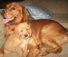 Buddy and Rusty!