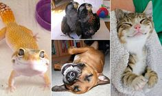 Hilarious pictures show grinning dogs, cats, birds and even LIZARDS #DailyMail