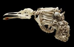 This small (15cm long) life-size hand-pistol has been completely covered with the bones of small sea-birds (mostly Broad-billed Prions), rabbits, petrel,sparrow, and starling. The main skull is from a black-backed gull. The teeth are from cows and sheep and the trigger is a hedgehog's jaw. It is mounted on two rods on a backing of recycled rimu timber inside a small glass fronted case.   Like the Machine gun it can be removed for the rods for closer examination.