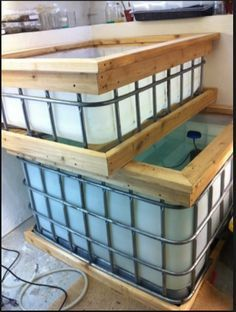 IBC totes are an inexpensive way to keep larger fish for breeding and for grow out tanks for the fry. Here's a few ideas for IBC totes in the fish room.