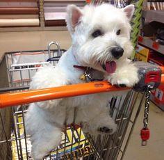 So mein kleiner Schatz, jetzt kaufen wir den Laden leer, okay!?