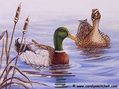 Carolyn W. Mitchell - Wildlife Art - Original Paintings