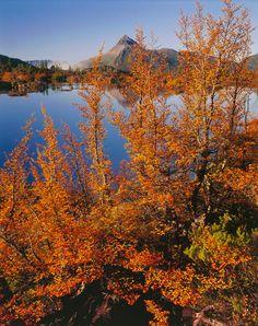 By Peter Dombrovskis Nature Tattoos, Tasmania, Photographers, Australia, Mountains, Landscape, Places, Travel, Fotografia