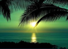 Eve Ocean Palm Nature Tree Large Reflections Emerald Travel Sunset Green Photo Background