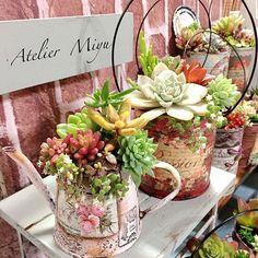 女性で、のリメ缶/多肉植物/机についてのインテリア実例を紹介。(この写真は 2015-12-15 06:24:01 に共有されました) Growing Succulents, Succulents In Containers, Container Flowers, Cacti And Succulents, Planting Succulents, Cactus Plants, Succulent Gardening, Succulent Terrarium, Container Gardening