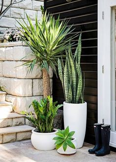 Garden Design Different pots with different plants, various heights of green - Style-savvy renovator Tara Dennis reveals how to turn plain pots into pretty planters - by Jane Parbury Patio Plants, Indoor Plants, House Plants, Front Porch Plants, Tall Potted Plants, Tall Planters, Deck Plants Ideas, Outdoor Pots And Planters, Plants On Balcony